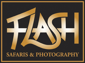 Flash Safaris & Photography